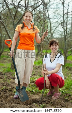 Female gardeners planting tree outdoor in spring
