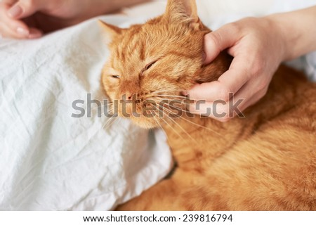 female hand caress red cat in bed - stock photo