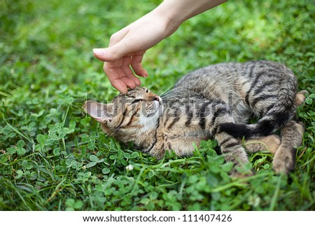 Female hand caressing young cat
