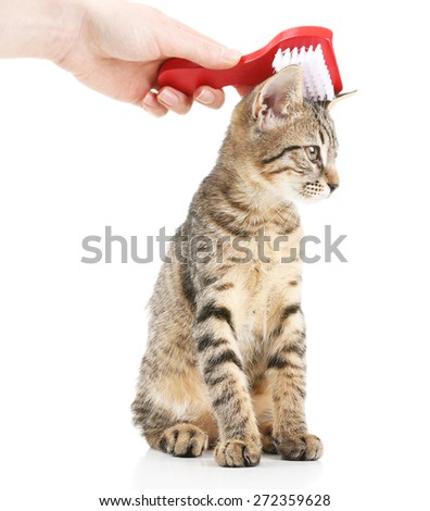 Female hand combing stripped kitten, isolated on white - stock photo