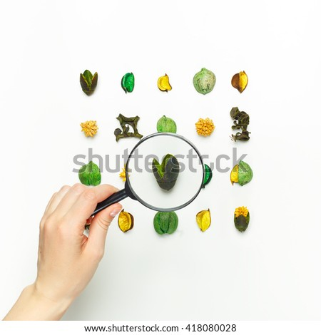 Female hand holding a magnifying glass over the dried flowers. Floral design. - stock photo