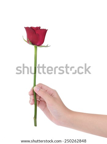 female hand holding a red rose ,isolated on white background