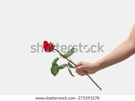 Female hand holding a single red rose isolated over white background, focus on hand - stock photo