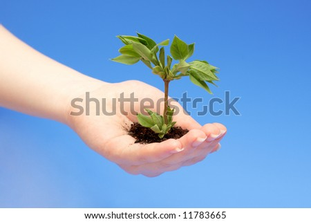 female hand holding a small tree over blue