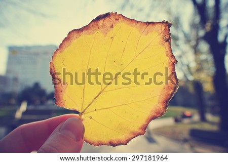 Female hand holding a yellow, golden leaf against the sun, on a sunny afternoon in early autumn. Image filtered in faded, washed out, retro style; nostalgic autumn vintage concept. - stock photo