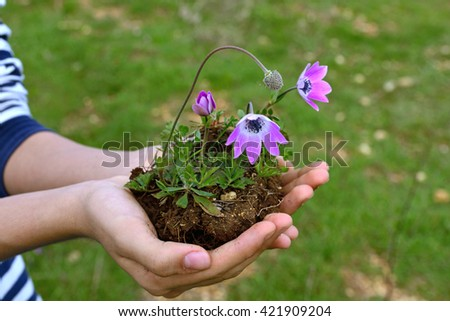 Female hand holding a young plant - stock photo