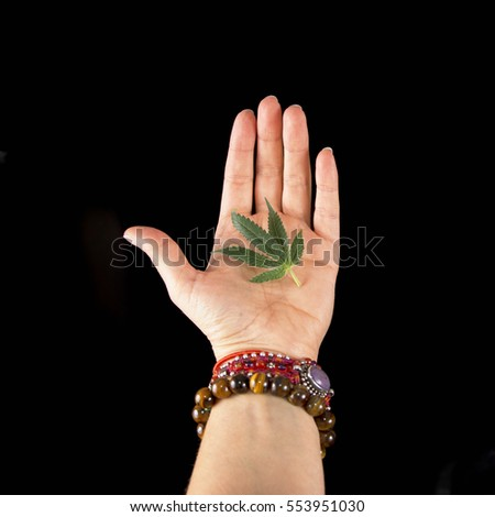 Female hand holding small cannabis leaf isolated over black background - cannabis concept
