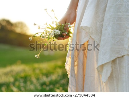 Female hand holding white wild flowers, summer evening. - stock photo