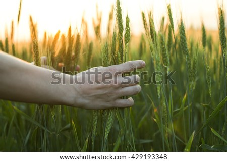 Female hand over the field on sunset - stock photo