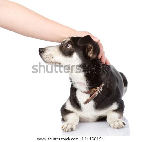 female hand patting dog head. isolated on white background - stock photo