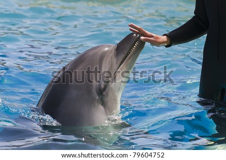 Female hand touching a dolphin - stock photo