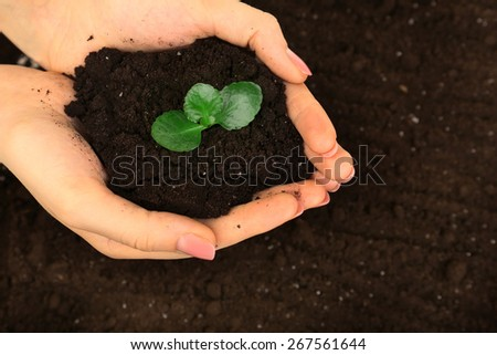 Female handful of soil with small green plant, closeup - stock photo