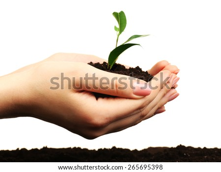 Female handful of soil with small green plant isolated on white - stock photo