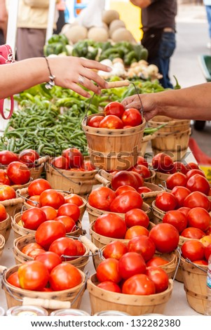 Female hands handling bushel basket filled with fresh locally grown red tomatoes at local farmers market - stock photo