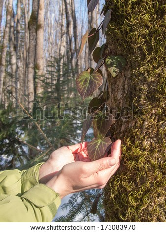 Female hands hold a liana on wood background - stock photo