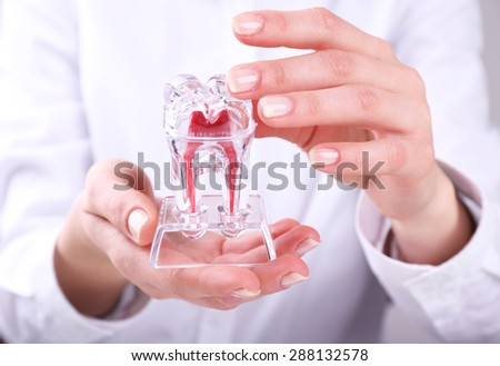Female hands holding dental model, closeup - stock photo
