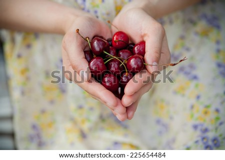 Female hands holding fresh sour cherries - stock photo