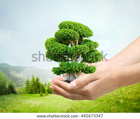 Female hands holding green tree on spring forest background