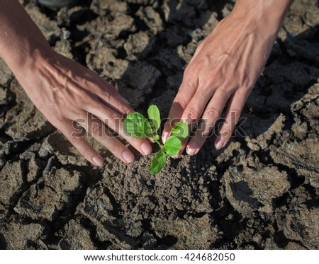 Female hands holding tree growing on cracked earth,environmental problems,love nature,growing tree on crack ground