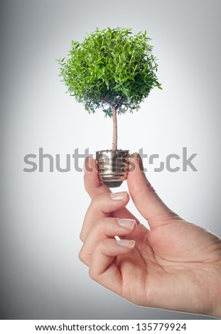 Female hands holding tree growing out of electric light bulb. Eco green energy saving in the future concept . A tree is growing inside a light bulb. - stock photo