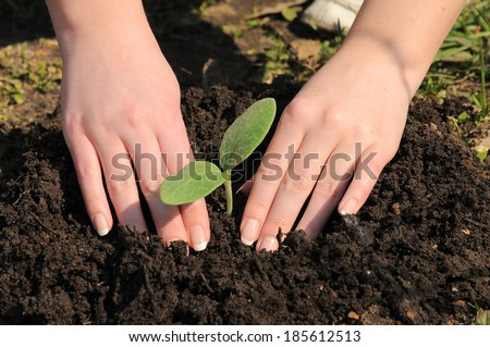 Female hands planting sprout
