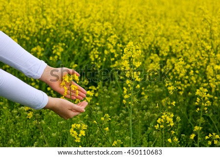 Female hands touching rape flowers.