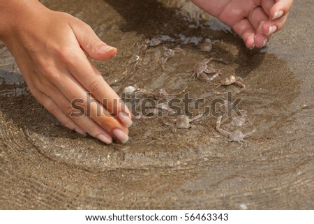 Female hands try to catch many small crabs;