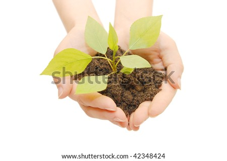 Female hands with a plant  isolated - stock photo