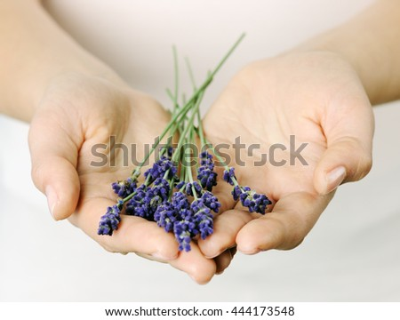 female hands with lavender - stock photo