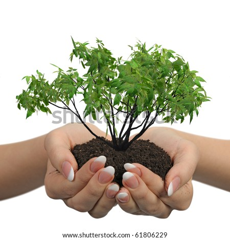 Female hands with soil and a plant. It is isolated on a white background - stock photo