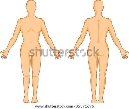 female human anatomy standing front ans back isolated on white - stock photo