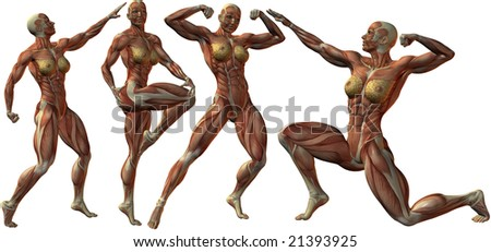 Female Human Bodybuilder Anatomy