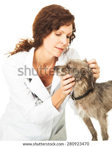 Female professional veterinarian doctor examining the ears of a small mixed breed dog. Isolated on white. - stock photo