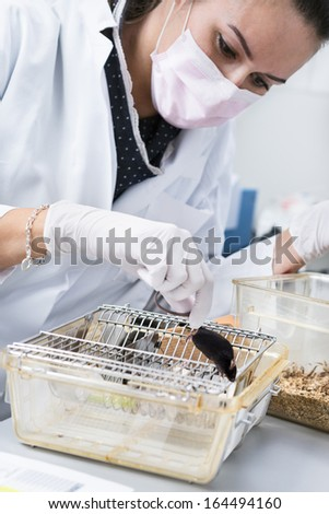Female scientists handles laboratory mouse, focus on the mouse - stock photo