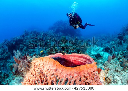 Female SCUBA Diver and a Large Sponge on a Tropical Coral Reef - stock photo