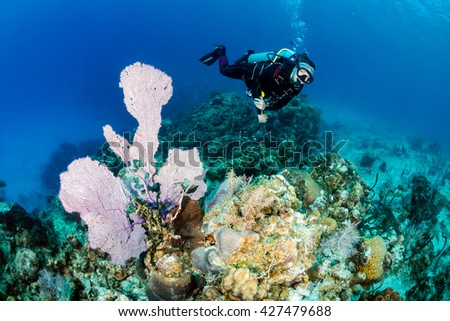 Female SCUBA diver next to a large sea fan - stock photo