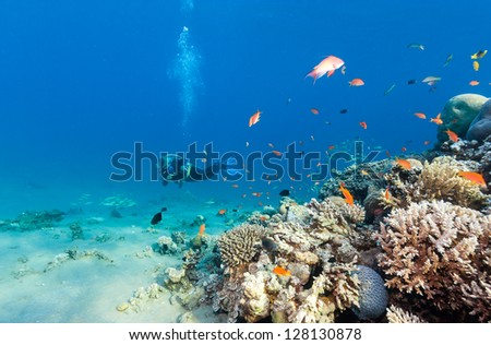 Female SCUBA diver next to hard coral on a tropical reef - stock photo