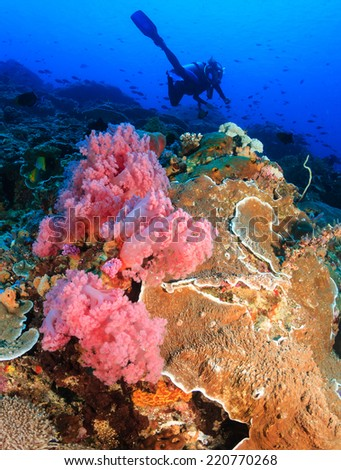 Female SCUBA diver swims over vividly colored soft corals on a tropical reef - stock photo