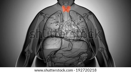 Female thyroid gland  anatomy in x-ray view - stock photo