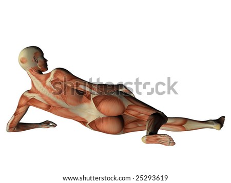 Female torso showing muscles from behind isolated on white - stock photo
