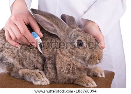 female vet holding a rabbit - stock photo