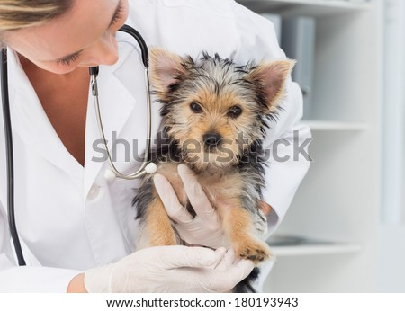 Female vet holding cute puppy in hospital