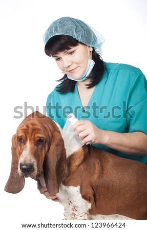 Female vet is taping up a dog - stock photo