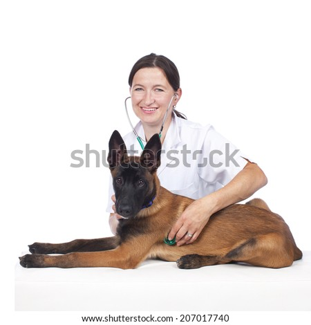 Female vet with Young sheperd dog