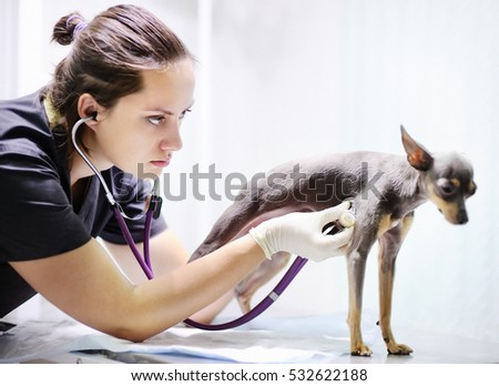 Female veterinarian doctor using stethoscope during examination in veterinary clinic. Little dog terrier in veterinary clinic