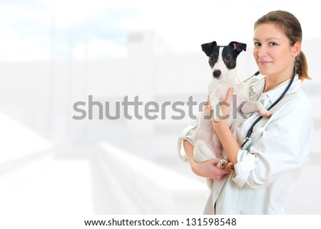 Female veterinarian holding jack russell terrier on hospital background - stock photo