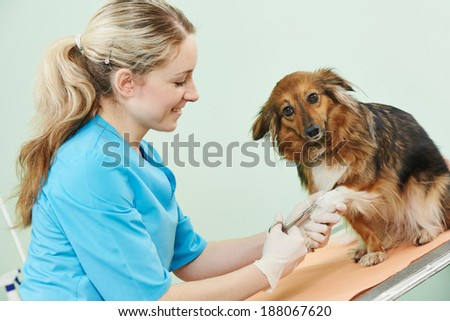 Female veterinarian surgeon worker treating dog in veterinary surgery clinic - stock photo