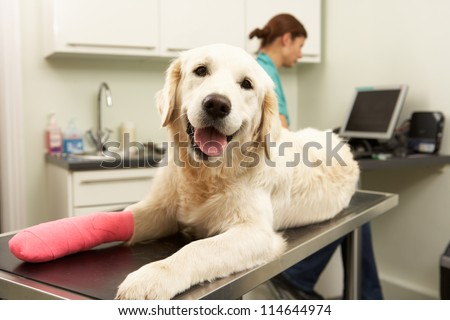 Female Veterinary Surgeon Treating Dog In Surgery - stock photo