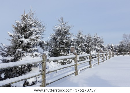 Fence and evergreens