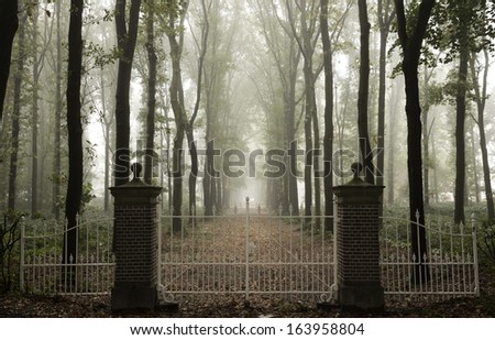Fence in a misty forest - stock photo